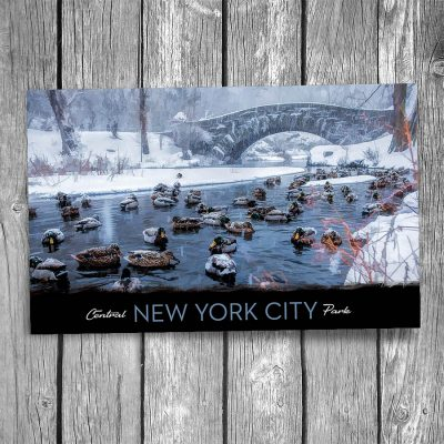 Central Park Ducks New York City Postcard